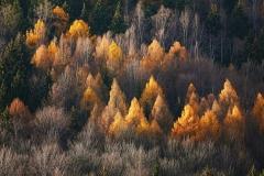 Jesień naGrabowcu