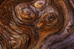 Słoje drewna martwego świerku