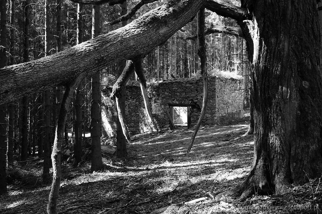 Ruiny kościoła Św. Karzyny, las okol. Jaworek Górny , Masyw Śnieżnika fot.Krzysztof Romańczukiewicz