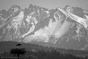 Wiosna wGorcach - bocianie gniazdo zwidokiem naTatry
