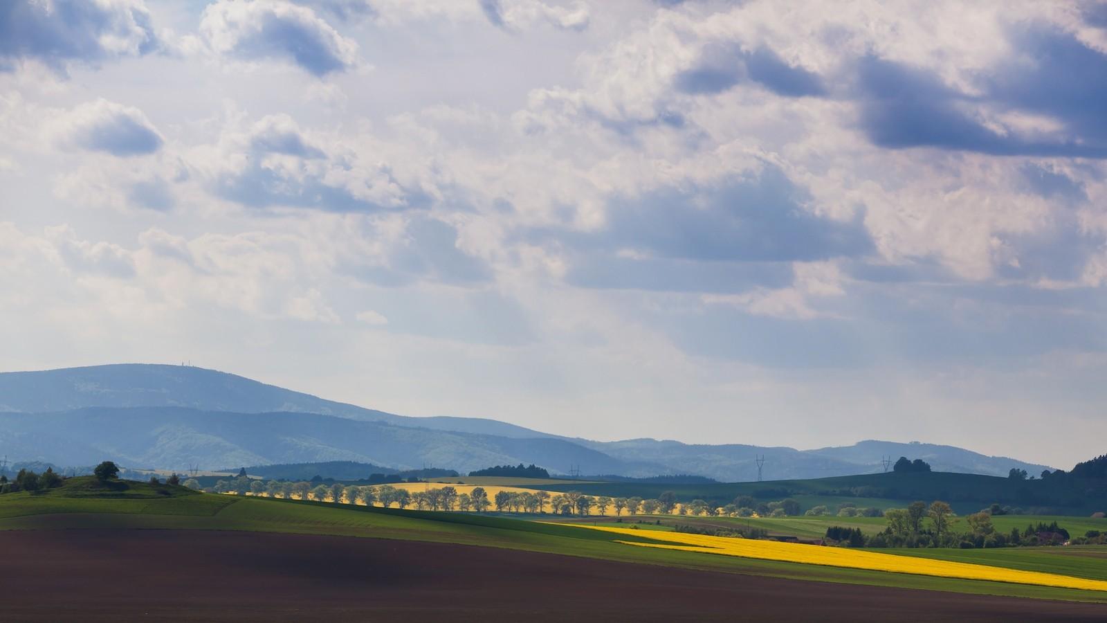 Kwitnące rzepaki -majowe pola naDolnym Śląsku