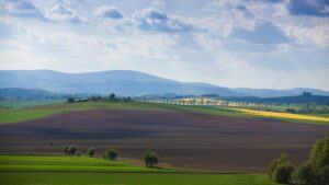 Dolnośłąskie pola w maju - kwitnące rzepaki