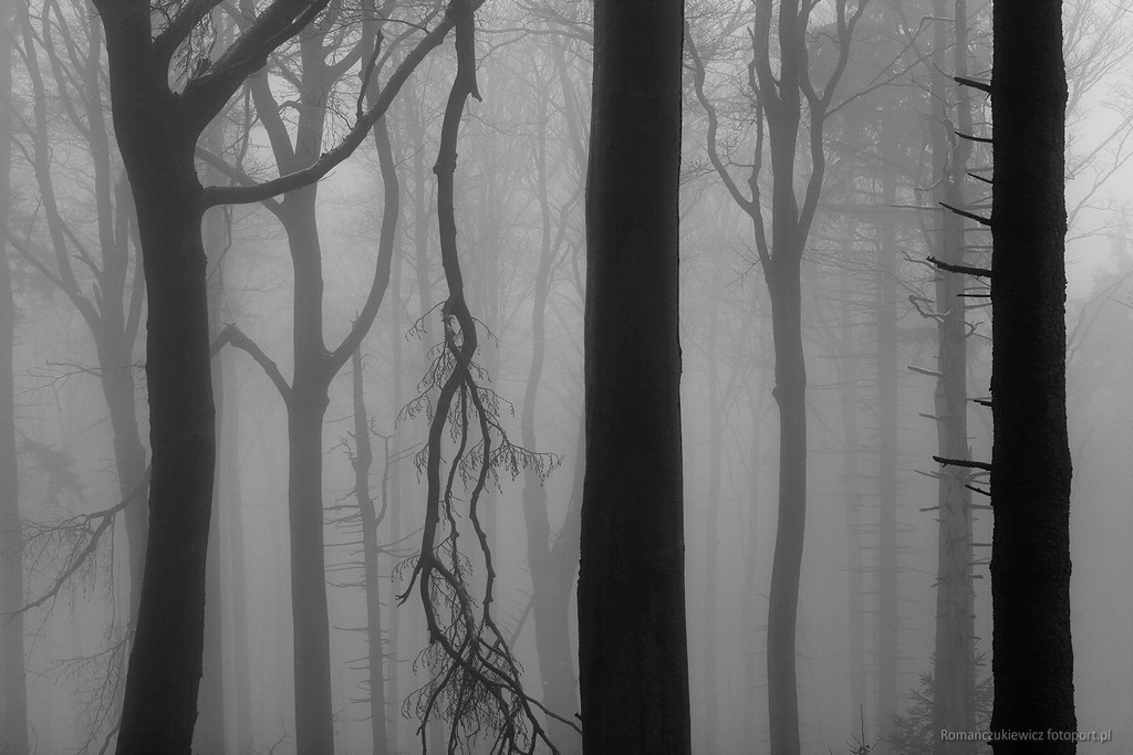 Las w Górach Sowich