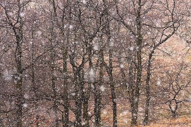 Ostatnia śnieżyca fot.Krzysztof Romańczukiewicz