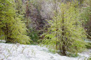 Majowe śniegi - Miłków 4 maja 2019