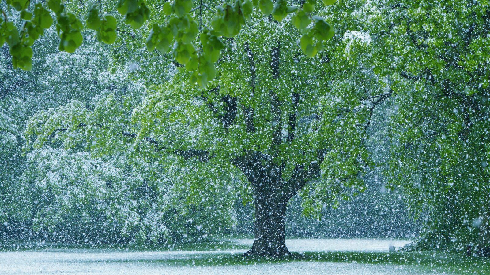 Zima wmaju - śnieżyca