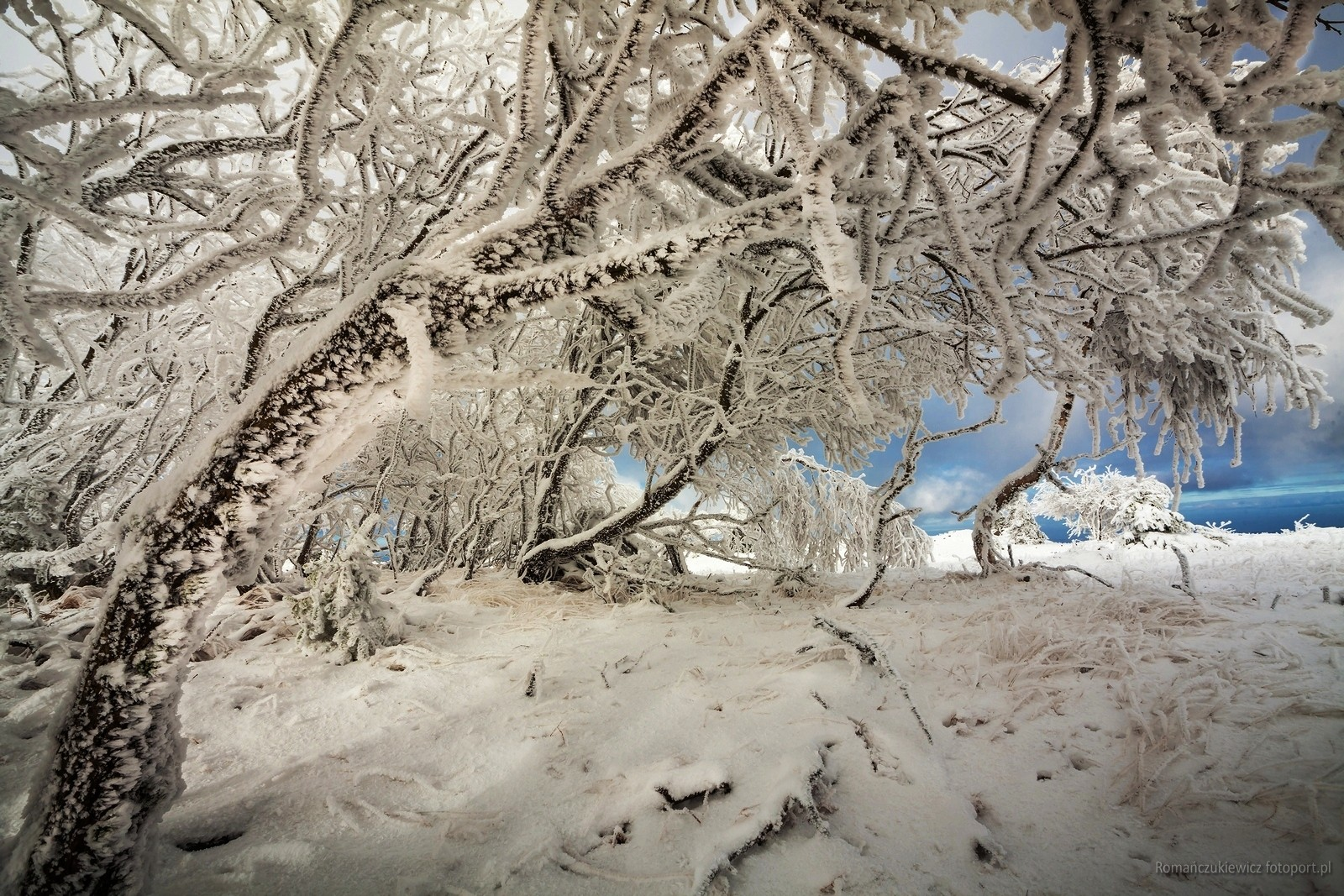 Zaczarowany las wGórach Izerskich
