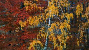 Pażdziernikowy zmierzch wGórach Sowich