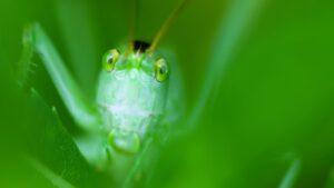 Cały ten zielony świat