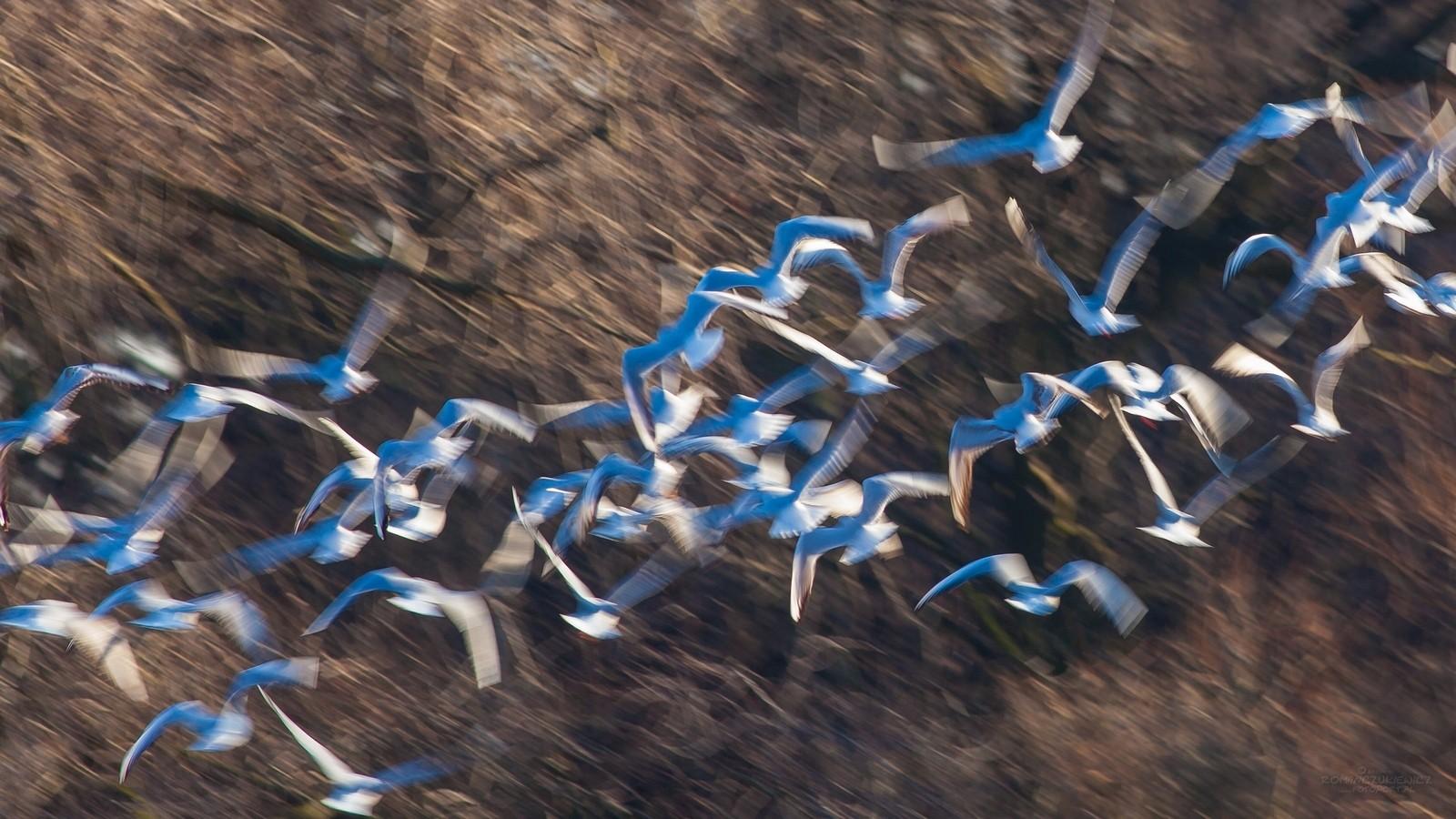 Intentional Camera Movement - ICM - celowe poruszenie kamerą fot.Krzysztof Romańczukiewicz www.fotoport.pl