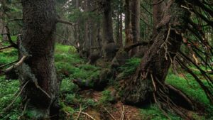 W karkonoskim lesie