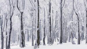 W lesie bukowym Góry Sowie