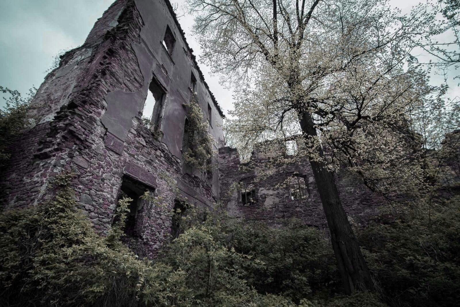 Ruiny. Pielaszkowicki pałac