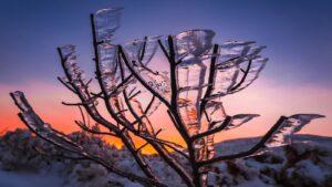 Po lodowej burzy Karkonosze fot.Krzysztof Romańczukiewicz