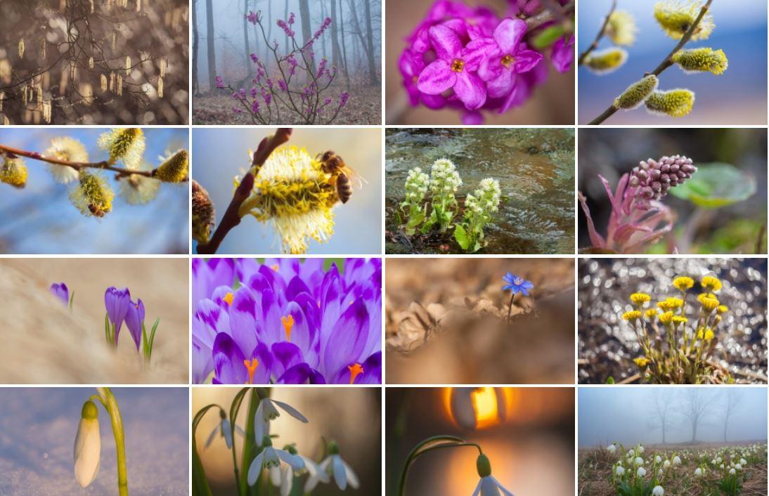 kwiaty wiosny galeria
